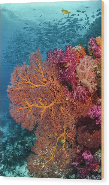 Fiji Fish And Coral Reef Wood Print by Jaynes Gallery