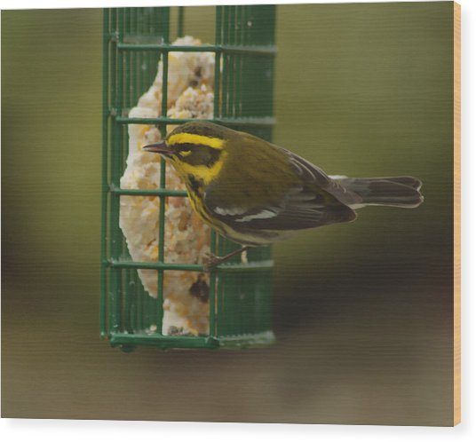 Finch On A Suet Wood Print by Ron Roberts