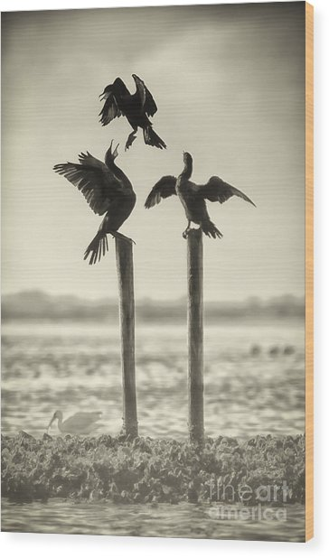 Find Your Own Perch Wood Print
