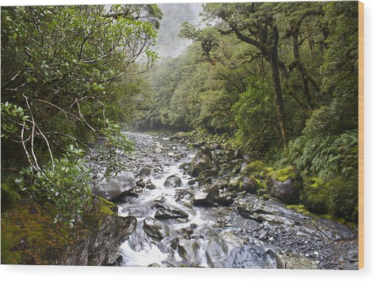 Fiordland National Park New Zealand Wood Print
