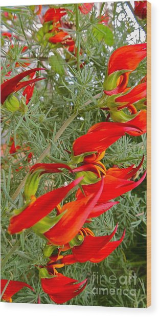 Fire Flowers Wood Print