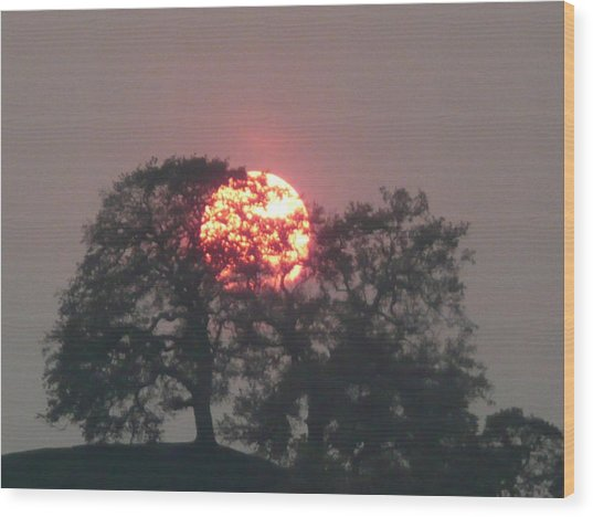 Fire In The Trees Wood Print