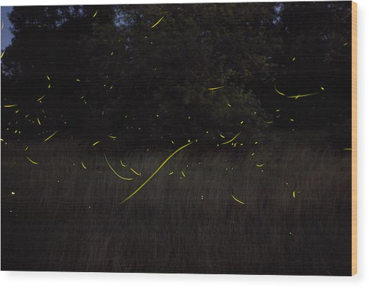 Firefly Traces On A Summer Night Wood Print