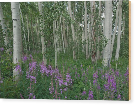 Fireweed And Aspen Wood Print