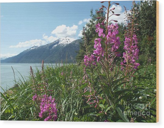 Fireweed At Yakutania Point Wood Print