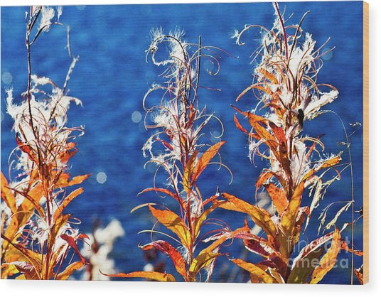 Fireweed Flower Wood Print
