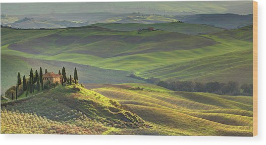 First Light In Tuscany Wood Print by Maurice Ford