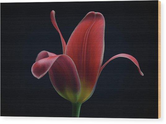 First Tulip Wood Print