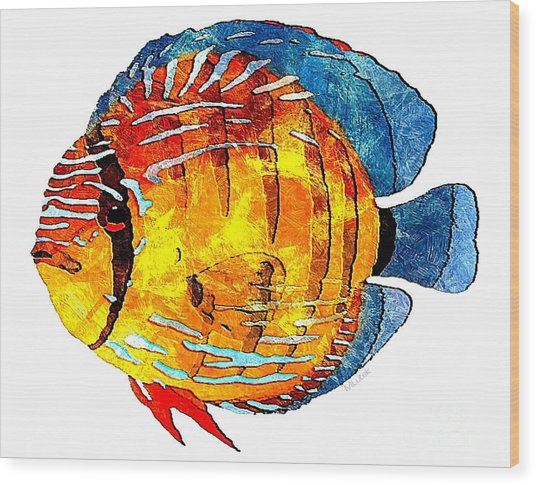 Fish 502-11-13 Marucii Wood Print