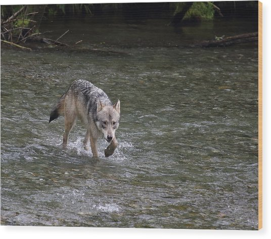 Fish Creek Wolf Wood Print