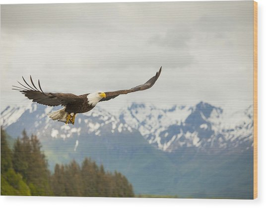 Fish Is On The Menu Wood Print by Tim Grams