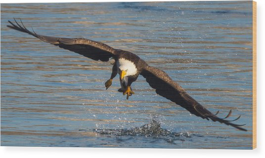 Fish On The Go  Wood Print by Glenn Lawrence