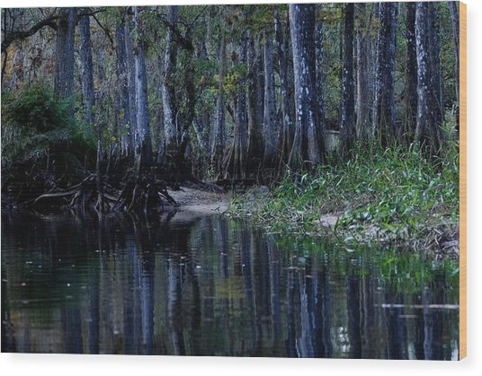 Fisheating Creek 29 Wood Print by Carol Kay