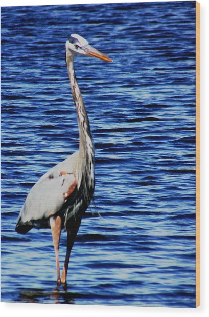 Fishing Wood Print by Will Boutin Photos