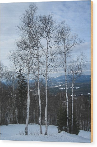 Five Birch Trees Wood Print