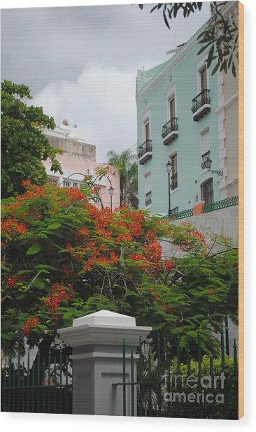 Flamboyan In Park Wood Print