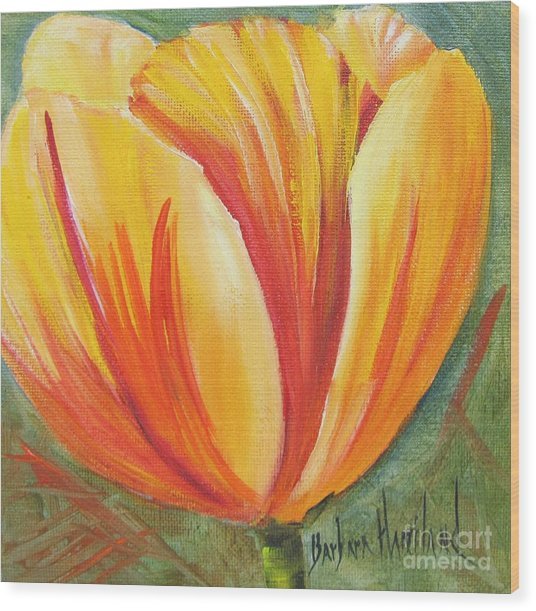 Flame Tulip By Barbara Haviland Wood Print