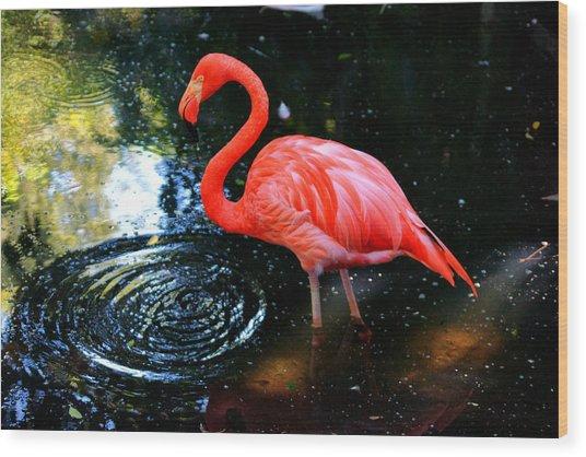 Flamingo 9 Wood Print by Dan Dennison