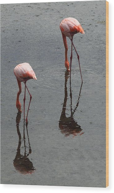 Flamingo Ballet Wood Print