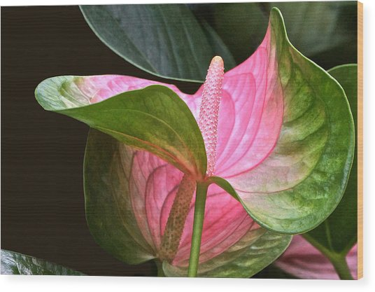 Flamingo Flower Wood Print