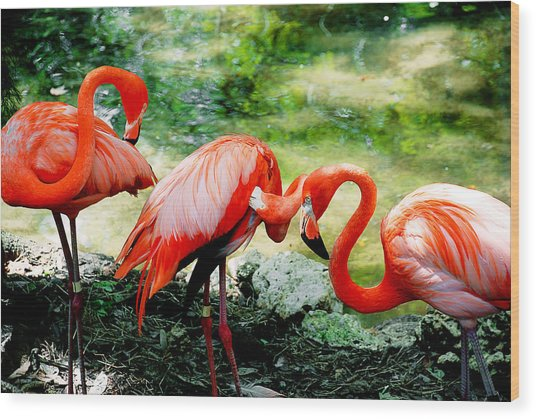Flamingo Friends Wood Print
