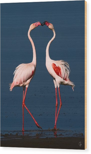 Flamingo Heart Wood Print by Jeppsson Photography