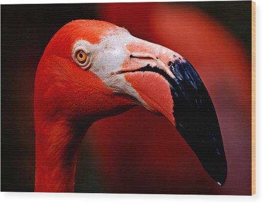 Flamingo Portrait Wood Print