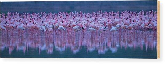 Flamingos Wood Print by David Hua