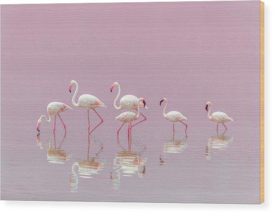 Flamingos Wood Print by Eiji Itoyama