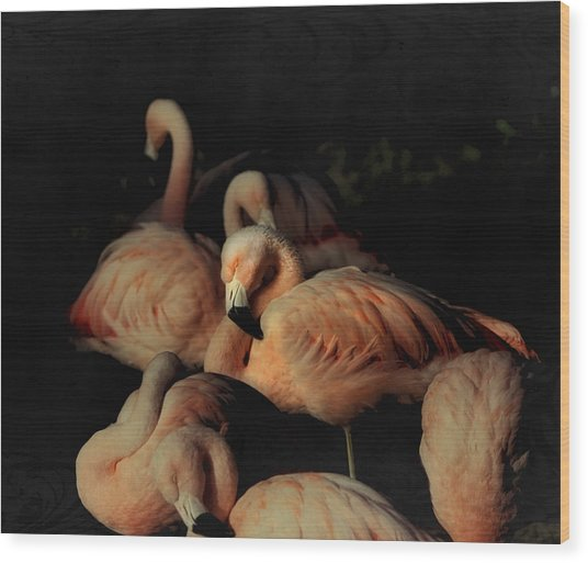 Flamingos In Repose Wood Print