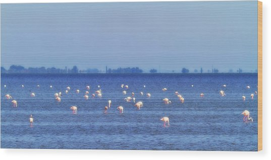 Flamingos In The Pond Wood Print