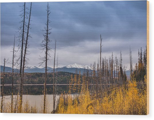 Flathead National Forest Wood Print