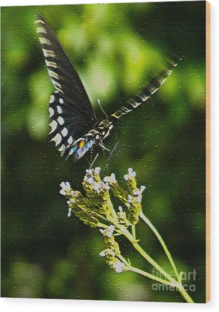 Flattering Flutter Wood Print