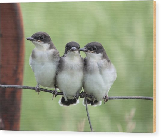 Fledged Siblings Wood Print
