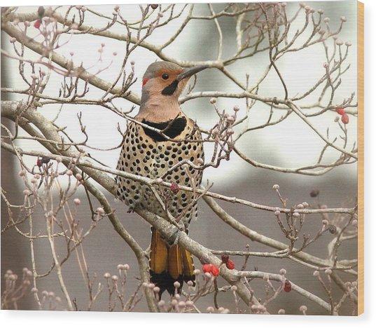 Flicker - Alabama State Bird - Attention Wood Print