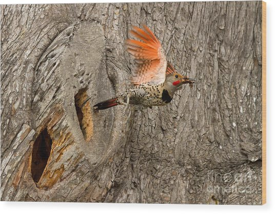 Flicker Flight Wood Print