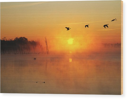 Flight At Sunrise Wood Print