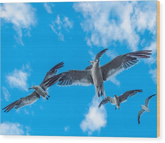 Flight Wood Print by CarolLMiller Photography