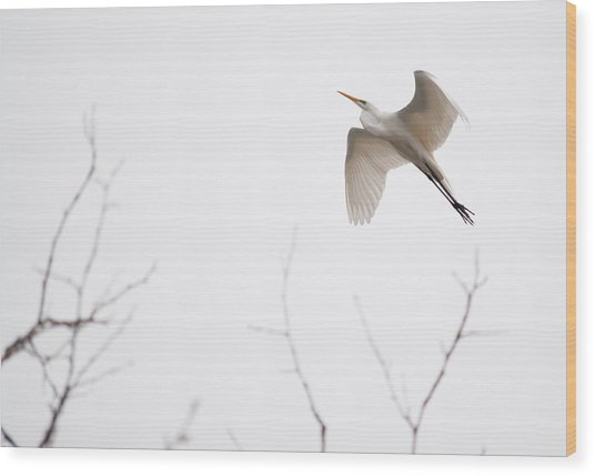Wood Print featuring the photograph Flight Of The Egret 1  by Rosemary Legge