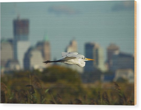 Flight Of The Great Egret Wood Print