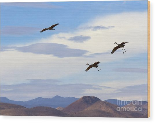 Flight Of The Sandhill Cranes Wood Print
