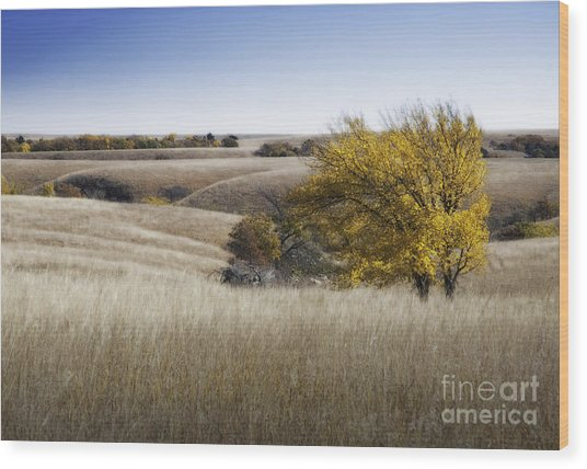 Flint Hills Autumn 013 Wood Print