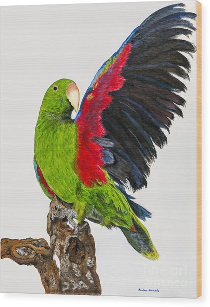 Flirting Parrot By Barbara Heinrichs Wood Print by Sheldon Kralstein