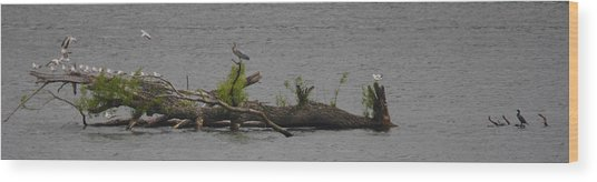 Floating Aviary Wood Print by Valerie Wolf
