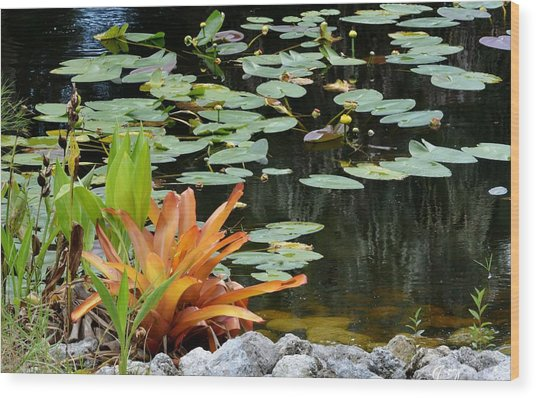 Floating Lily Pond Wood Print
