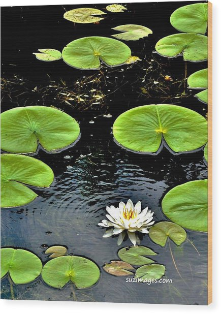 Floating Lily Wood Print