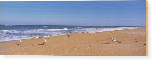 Flock Of Birds On The Beach, Flagler Wood Print