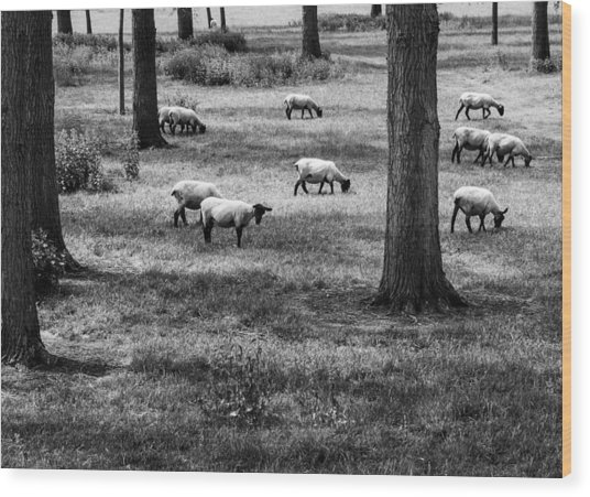 Flock Of Sheep Wood Print