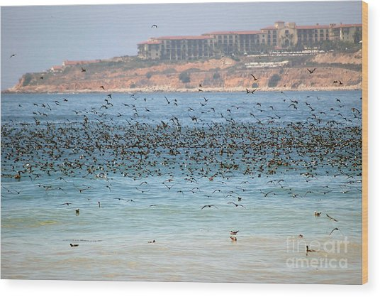 Flocking At Terranea Wood Print