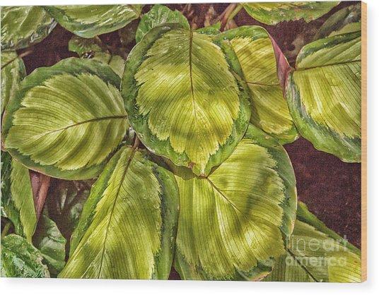 Floral 1 Wood Print